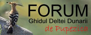 Forum GDD