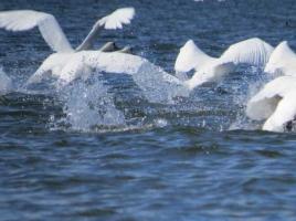 Tura in Delta 05.10.2013 – Canalul Mitchina si intrarea sudica in Lacul Rotund